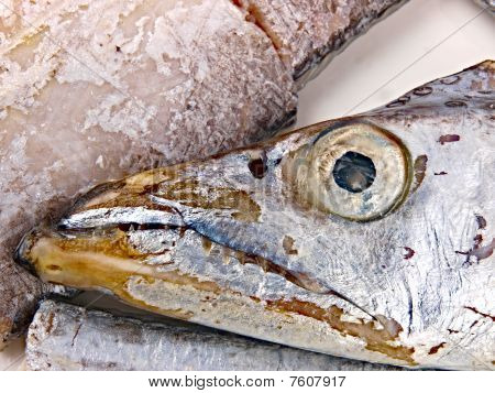 Fresh Conger Fish
