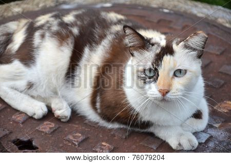 Cute Striped Street Cat