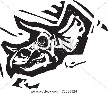 Triceratops Fossil Skull