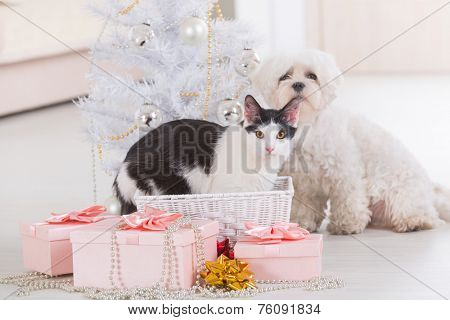 Cat and cute little dog Maltese sitting with gifts near Christmas tree