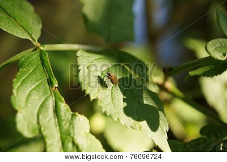 A Fly Resting On A Leaf
