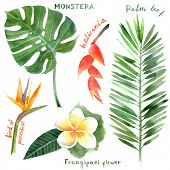 picture of tropical plants  - hand drawn watercolor tropical plants - JPG