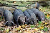 stock photo of piglet  - Nice small - JPG