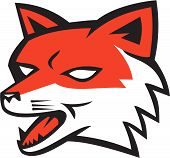 picture of growl  - Illustration of an angry fox wild dog wolf head growling set on isolated white background done in retro style - JPG