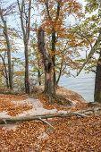 stock photo of polonia  - Autumnal trees on Kepa Redlowska cliff - JPG