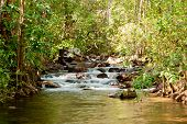 foto of darwin  - Wild nature in Litchfield National Park - JPG