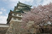 stock photo of cherry-blossom  - Nagoya Castle during cherry blossom season daytime - JPG