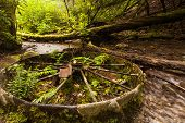 picture of train-wheel  - A train wheel laying in a river - JPG