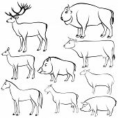 foto of wild hog  - Set of monochrome wild and domestic animals for design - JPG