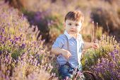 picture of lavender field  - Little boy in the summer on the collective farm field lavender - JPG