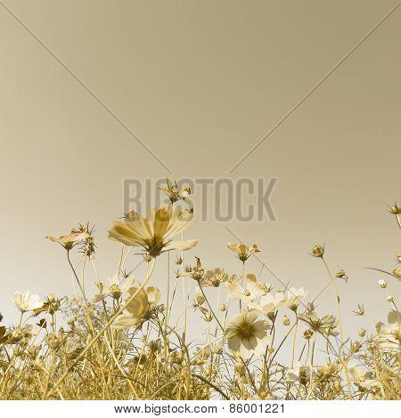 Vintage Flower