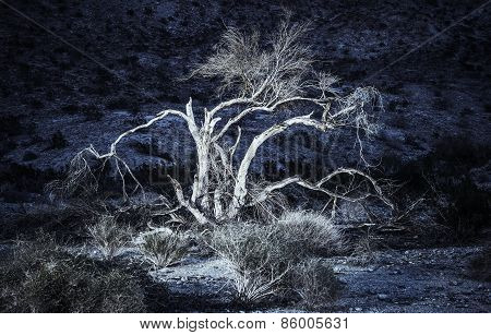 Desert Flora At Night