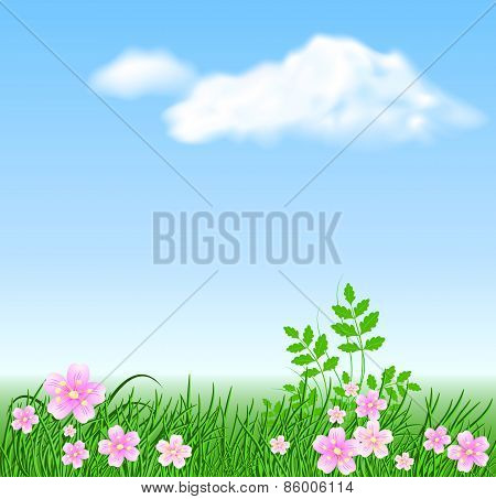 Meadow Flowers On The Sky Background