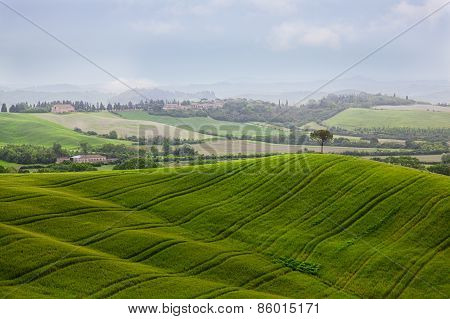 Beautiful Rural Landscape With The Green Field And A Tree Growing At Hill Top, Tuscany. Italy