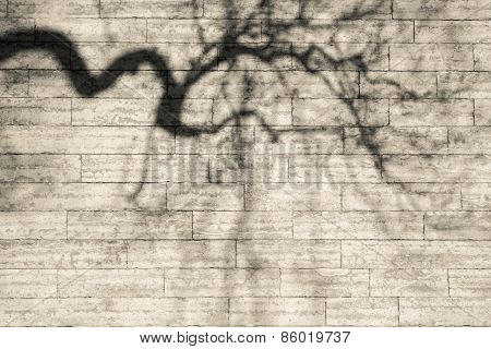 Shadows Bent Boughs On A Beige Wall