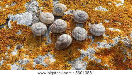 Snail Shell On A Rock Covered With Moss Lichen Orange.