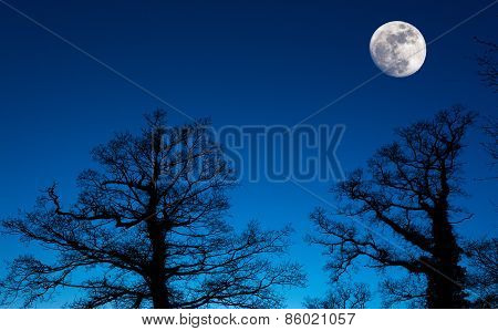Moon Silhouette