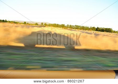 Car Shadow, Sunny Morning Travel Concept