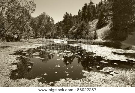 Landscape With Pond And Pine Forest In Spain. Sepia Tone
