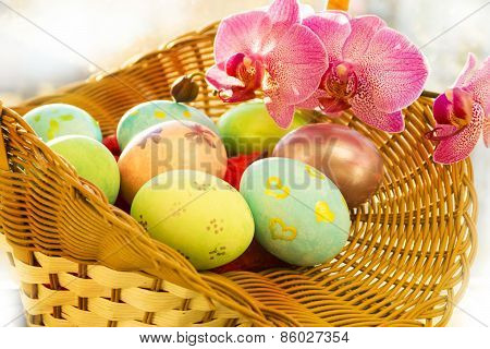 Easter eggs in a basket,  flowering Orchid, close