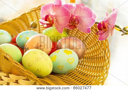 Easter eggs in a basket,  flowering Orchid, close, sunrise