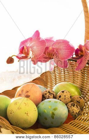 Easter and quail eggs in a wicker basket with Orchid from above