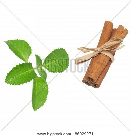 Cinnamon And Mint Leaves