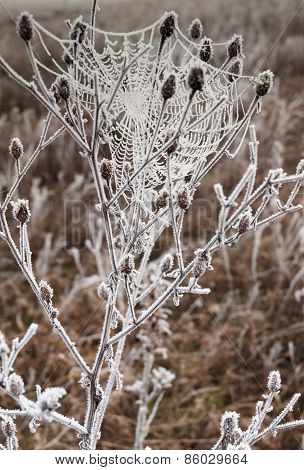 Web Frosted Up On The Bush