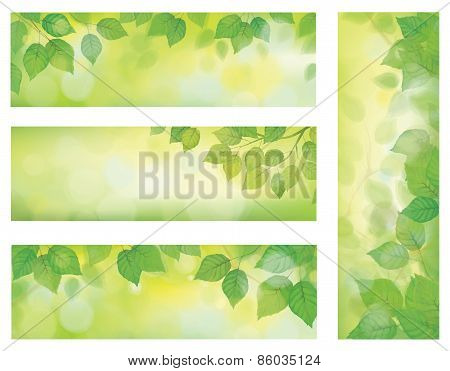 Vector nature banners, green leaves borders.