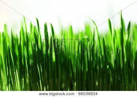 Wet grass close-up background