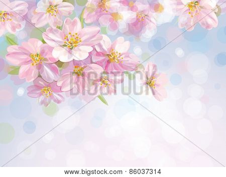Vector blossoming tree background.