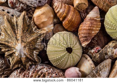 A Mix Of Seashells