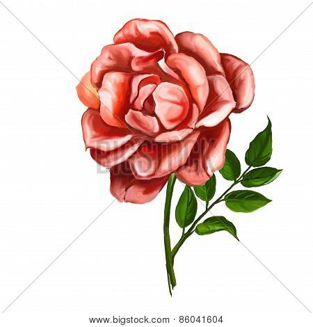 rose vector illustration  hand drawn  painted watercolor