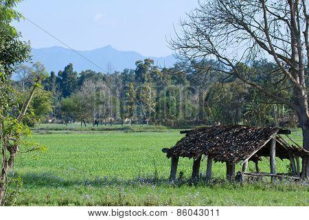 landscape in Terai, Thakurdwara, Bardia, Nepal