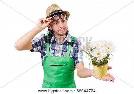 Young funny gardener with pot of camomiles isolated on white