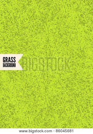 Green grass texture. Vector background.