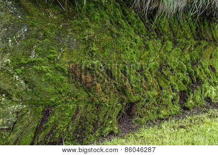 Moss Pattern