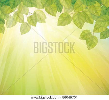 Vector green birch's leaves background.