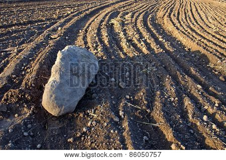 Big Stone On Cultivated Farm Field Soil