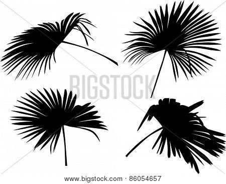 illustration with palm tree leaves isolated on white background