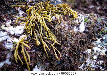 Seaweed In The Coast