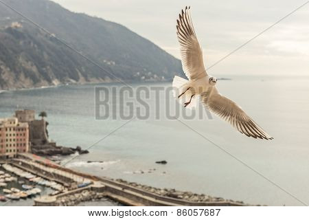 Seagull Flying Over Camogli, Italy