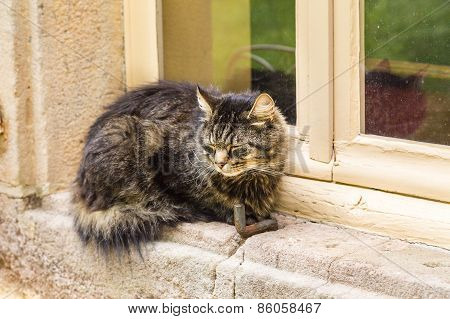 Tortoiseshell Cat Asleep On The Window Sill Of An Old Stone Hous