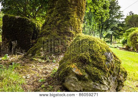 Moss Covered Rock And Tree Trunk In An Old Garden