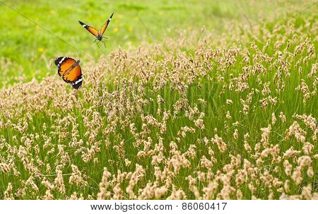 Spring Meadow And Butterflies
