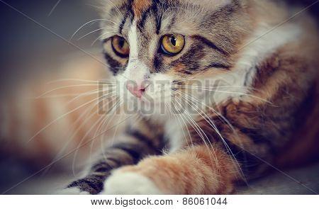 Portrait Of Multi-colored A Cat