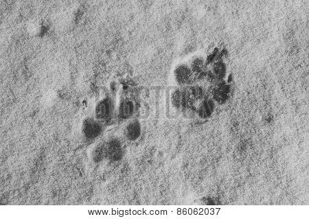 Dog Traces