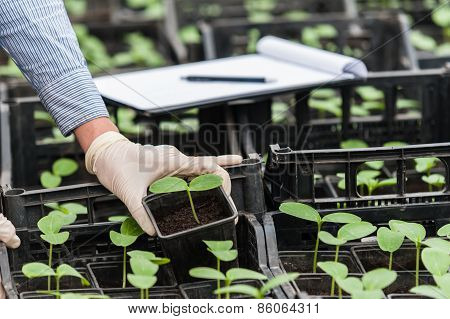 Close up of bio technician hand inspecting a plant