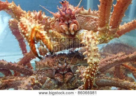 Crabs In Tank On Fishing Boat