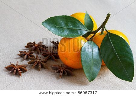 Tangerine Branch And Spiced Star Anis